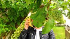 Maria, mathilde, cecilie & victoria - Frugt er godt - rygning er NOT