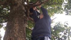 Billed af Laurits. Sophus er oppe i træet og Simon M hænger i træet - Sophus som er oppe i træet har mega meget energi så han kan komme op i træet uden problemer. Men Simon der imod ryger og har mindre energi så det er svært for ham at komme der op. Han skal bruge mere energi og har svært ved at være meget aktiv. Derfor er det ikke cool og ryge.
