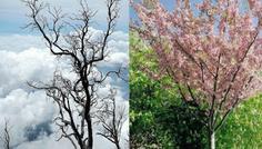 Valdemar Tobias og Jeppe - Det er cool at vide at ens lunger ser gode ud og ikke ligner det kedelige danske efterårs træ