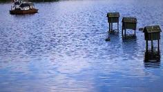 Dennis & Passng - Det er cool fordi de har bygget små huse i søen og ænderne de sidder på huset.