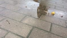 Gursewak Singh - Her kan man se reflektionen af min skygge i vandpytten
