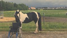 Sofia og Thea - det er cool at en hest kan hjælpe de multi handicappede børn eller dem der har dårlig balance pga. en sygdom med at få det bedre.
