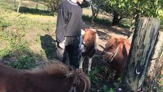 Rikke og sofie - drenge og heste er cool