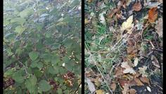 Yunus deniz levent - Blade der er visnet og blade som ikke er visnet