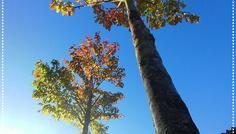 Vejlebroskolen Melike 7.b og Nimra 7.b - Træerne er cool fordi det kan holde på så mange blade.